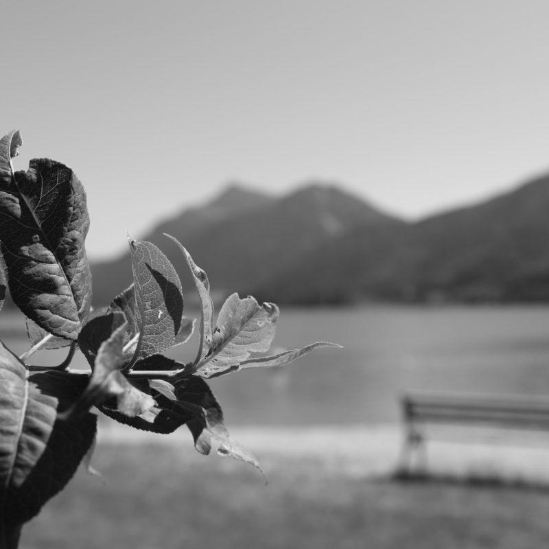 schwarz weiß fotografieren